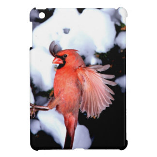 NA, USA, Minnesota, Mendota Heights. Female Cover For The iPad Mini