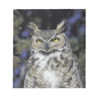 NA, USA, New Mexico, Wildlife West Nature Park Notepad