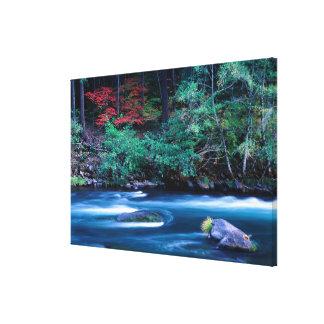 NA, USA, Oregon, Fall Foliage on North Umpquah Canvas Print