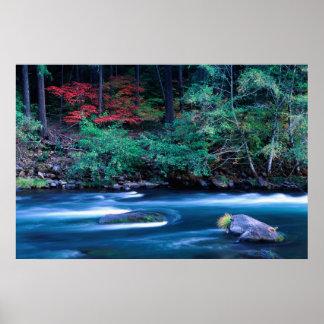 NA, USA, Oregon, Fall Foliage on North Umpquah Poster