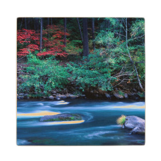 NA, USA, Oregon, Fall Foliage on North Umpquah Wood Coaster