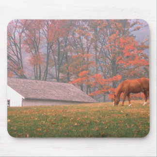 NA, USA, PA, Valley Forge. Horse grazing in a Mouse Pad