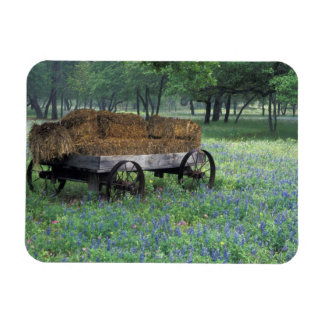 NA, USA, Texas, east of Devine, Old wagon in Magnet