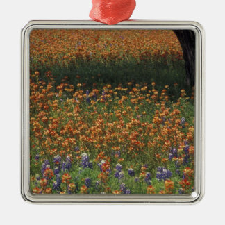 NA, USA, Texas, Hill Country, Paint brush and Christmas Ornament