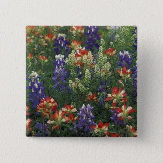 NA, USA, Texas, near Marble Falls, Paint brush 15 Cm Square Badge