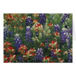 NA, USA, Texas, near Marble Falls, Paint brush Card