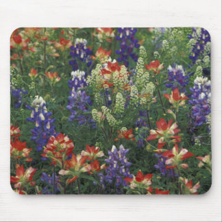 NA, USA, Texas, near Marble Falls, Paint brush Mouse Mat