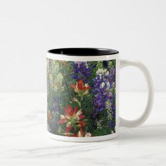 NA, USA, Texas, near Marble Falls, Paint brush Two-Tone Coffee Mug