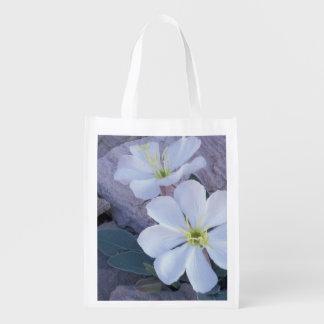 NA, USA, Utah, Arches NP, Evening primrose