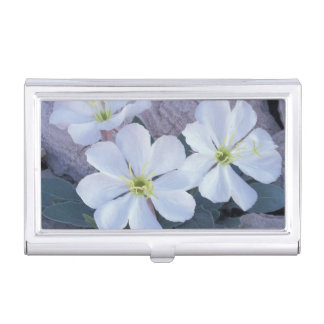NA, USA, Utah, Arches NP, Evening primrose Business Card Holder