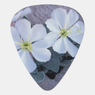 NA, USA, Utah, Arches NP, Evening primrose Plectrum