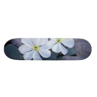 NA, USA, Utah, Arches NP, Evening primrose Skate Decks