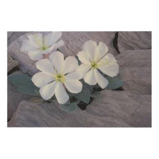 NA, USA, Utah, Arches NP, Evening primrose Wood Wall Decor
