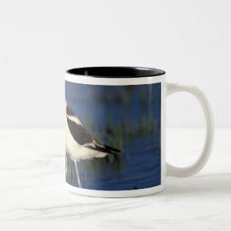 NA, USA, Utah, Bear River. American avocet Two-Tone Coffee Mug