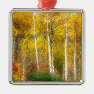 NA, USA, Washington, Fall Aspen Trees along Christmas Ornament