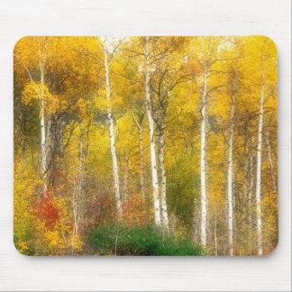 NA, USA, Washington, Fall Aspen Trees along Mouse Mat