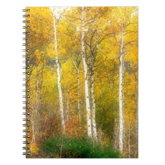 NA, USA, Washington, Fall Aspen Trees along Notebook