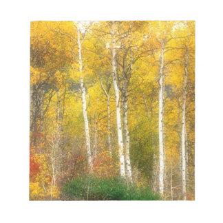 NA, USA, Washington, Fall Aspen Trees along Notepads