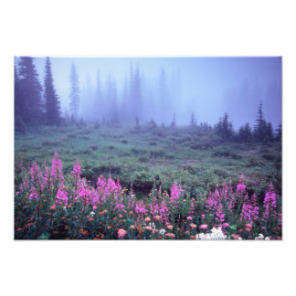 NA, USA, Washington, Foggy Alpine Meadow, Mt. Art Photo