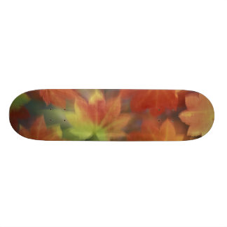 NA, USA, Washington, Issaquah, Vine maple 19.7 Cm Skateboard Deck
