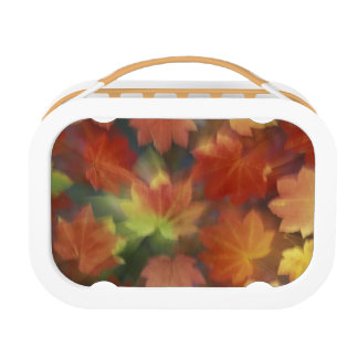 NA, USA, Washington, Issaquah, Vine maple Lunch Box