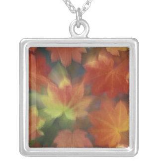 NA, USA, Washington, Issaquah, Vine maple Silver Plated Necklace