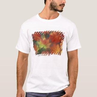 NA, USA, Washington, Issaquah, Vine maple T-Shirt