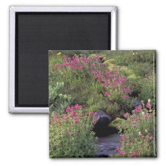 NA, USA, Washington, Mt. Rainier NP, Pink Magnet