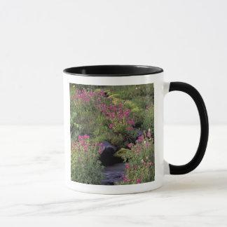 NA, USA, Washington, Mt. Rainier NP, Pink Mug