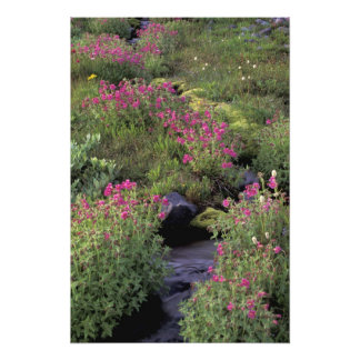 NA, USA, Washington, Mt. Rainier NP, Pink Photo Art