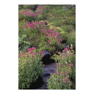 NA, USA, Washington, Mt. Rainier NP, Pink Photo Print