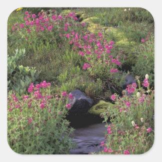 NA, USA, Washington, Mt. Rainier NP, Pink Square Sticker