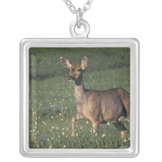 NA, USA, Washington, Olympic NP, Mule deer doe 2 Silver Plated Necklace