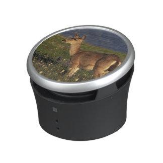 NA, USA, Washington, Olympic NP, Mule deer doe Bluetooth Speaker