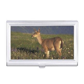 NA, USA, Washington, Olympic NP, Mule deer doe Business Card Holder