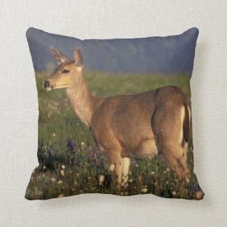 NA, USA, Washington, Olympic NP, Mule deer doe Cushion