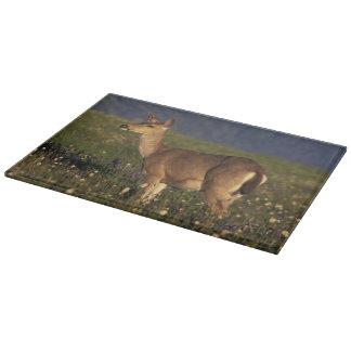 NA, USA, Washington, Olympic NP, Mule deer doe Cutting Board