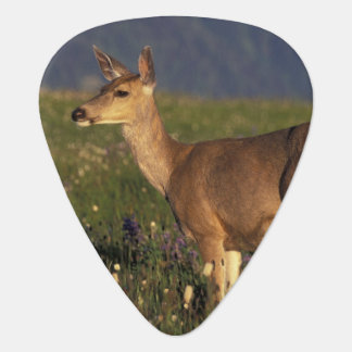 NA, USA, Washington, Olympic NP, Mule deer doe Guitar Pick