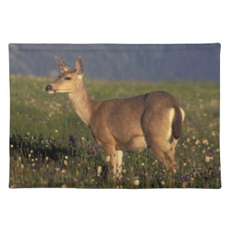 NA, USA, Washington, Olympic NP, Mule deer doe Placemat