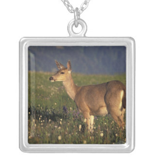 NA, USA, Washington, Olympic NP, Mule deer doe Silver Plated Necklace