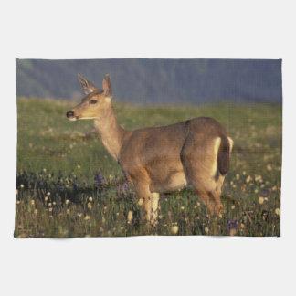 NA, USA, Washington, Olympic NP, Mule deer doe Tea Towel