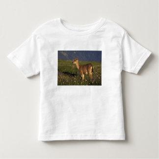 NA, USA, Washington, Olympic NP, Mule deer doe Toddler T-Shirt