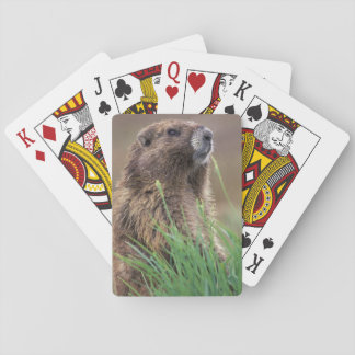 NA, USA, Washington, Olympic NP, Olympic 2 Playing Cards