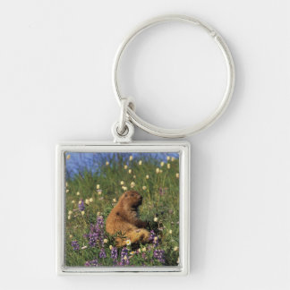 NA, USA, Washington, Olympic NP, Olympic Silver-Colored Square Key Ring