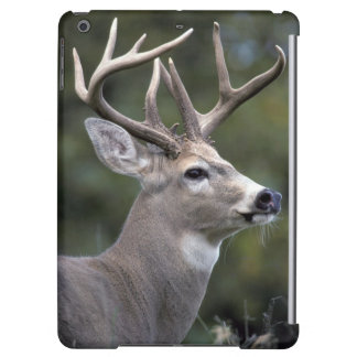 NA, USA, Washington State, White-tailed deer,