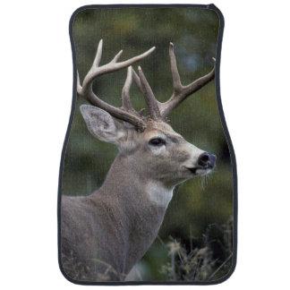 NA, USA, Washington State, White-tailed deer, Car Mat