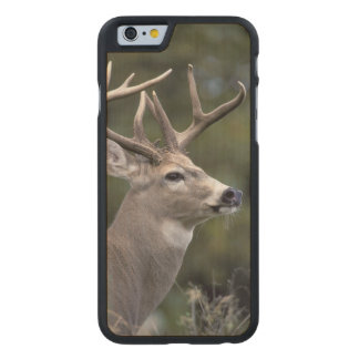 NA, USA, Washington State, White-tailed deer, Carved® Maple iPhone 6 Slim Case