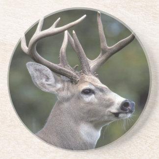 NA, USA, Washington State, White-tailed deer, Coaster