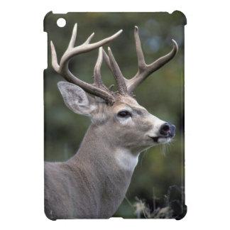 NA, USA, Washington State, White-tailed deer, Cover For The iPad Mini
