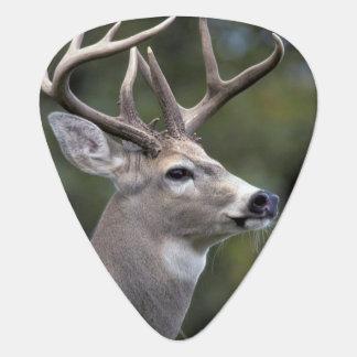 NA, USA, Washington State, White-tailed deer, Guitar Pick